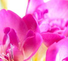 Purple Freesia Flowers Sticker