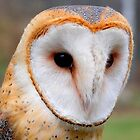 Willow, The American Barn Owl 3 by Joseph T. Meirose IV