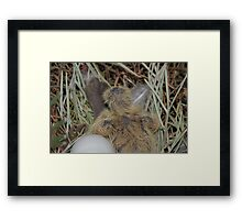 baby dove just hatched Framed Print