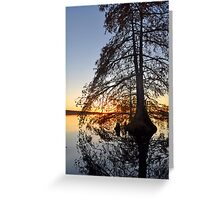 Cypress swirl Greeting Card