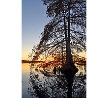 Cypress swirl Photographic Print