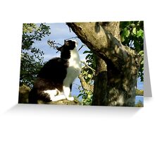 Shall I chance it? Greeting Card