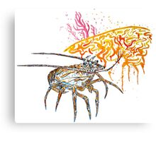 Caribbean Spiny Lobster Canvas Print