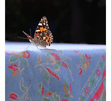 Painted Lady Butterfly Photographic Print