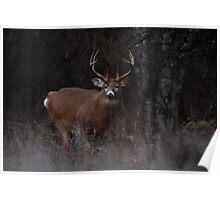 The 'Freak' - White-tailed Deer Poster