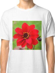 Bishop of Llandaff dahlia bloom Classic T-Shirt