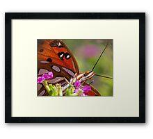 Rasberry Swirl Framed Print