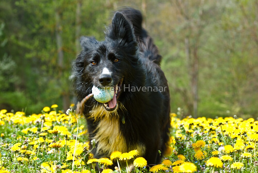 Dandelion Fun by Karen Havenaar