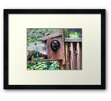 Squirrel Buffet Framed Print