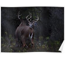 The Confrontation - White-tailed Deer Poster