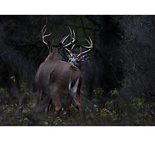 The Confrontation - White-tailed Deer Photographic Print