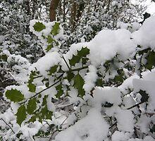 Holly in Winter  by damonsphotos