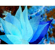 Blue and Turquoise Abstract Leaves Photographic Print