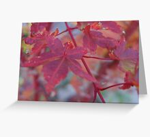 japanese maple tree Greeting Card
