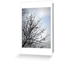 Winter is Coming II - Bare Branches Greeting Card