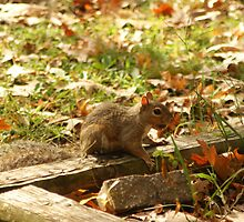 sweet baby squirrell freind by rue2