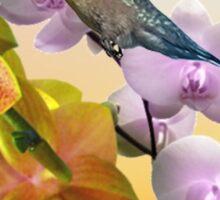 Hummingbird And Orchids Sticker