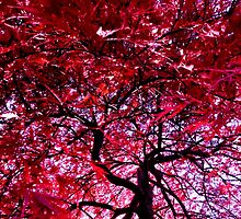 Under the Red Maple by Scott  Hafer