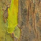 Natural Abstract by Laurie Minor