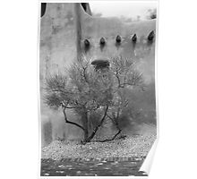 Santa Fe - Adobe Building and Tree Poster