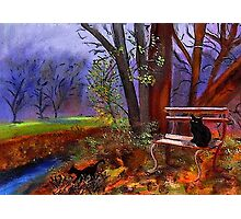 Black Cats In Park Photographic Print
