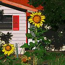 Here Comes the Sun by Sherryll  Johnson
