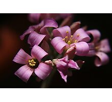 Purple love. Beautiful flowers captured in Bloemfontein, South Africa. Photographic Print