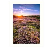 Blooming moorland Art Print
