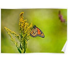 Monarch Butterfly - 42 Poster