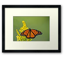 Monarch Butterfly - 43 Framed Print