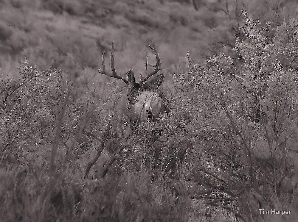 In the brush by Tim Harper