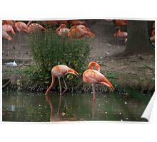 Flamingo's 2 Poster