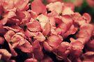 Pink Dogwood by Joshua Greiner