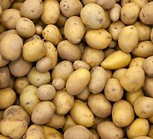 Potatoes by link2sue