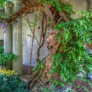 In The Wisteria Courtyard by Jane Neill-Hancock