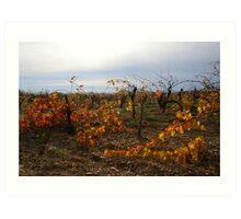 November Vineyards Art Print