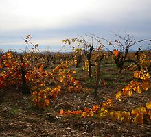 November Vineyards by WildWheat