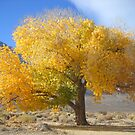 One Good Looking Tree  Featured Eight Times by marilyn diaz