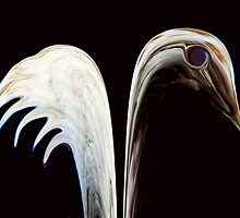 Ivory Wings © by Dawn M. Becker