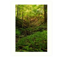 Green Ravine, Short Hills Provincial Park Art Print