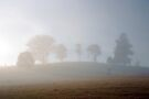 Morning Mist by Odille Esmonde-Morgan