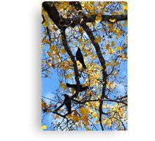 Crow Pi Canvas Print