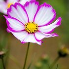 """Pink """"n"""" white by JEZ22"""