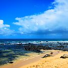 Poi'pu Monk Seals by Benjamin Padgett