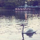 swan and swan boats in boston by STUDIOCLAIRE