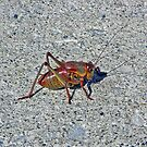 Mormon Cricket - Northeastern Nevada by Rebel Kreklow