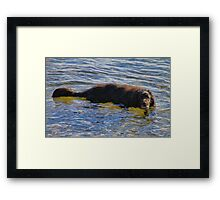 'Walter the Water Dog' Framed Print