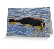 'Walter the Water Dog' Greeting Card
