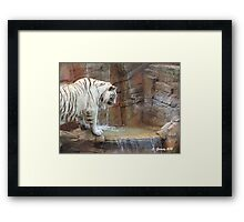 Playing in the water  Framed Print
