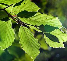 Last Of The Summer Leaves by Susie Peek